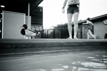 Run duck